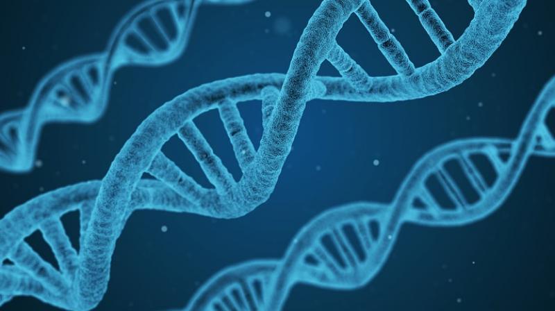 科学家发现对调节免疫力起关键作用的新基因