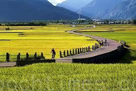 农业是区块链技术发展和实施最有前途的部门之一