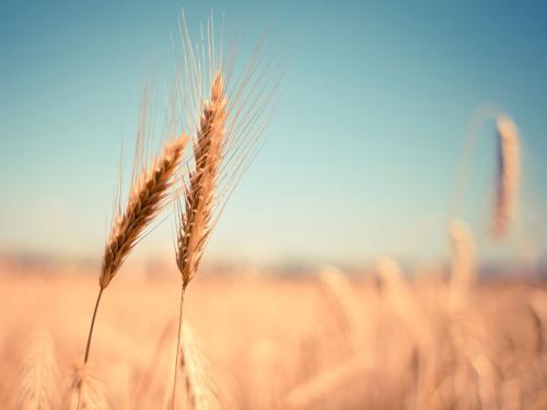 """复制农产品""""保险+期货""""模式 工业品价格保险迎""""首秀"""""""