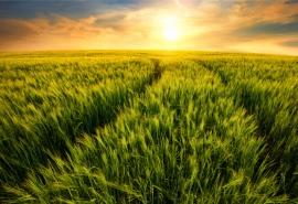 """区块链赋能农业溯源管理 实现""""田间到舌尖""""全流程品控监管"""
